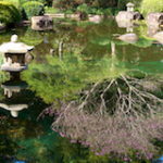 Reflected Japanese Garden