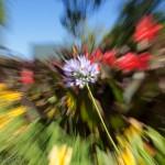 zoomed flower
